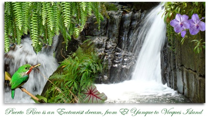 El Yunque.com website photo
