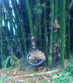 Bike wheel with bamboo growing through it