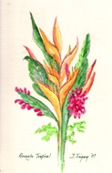 watercolor of tropicals